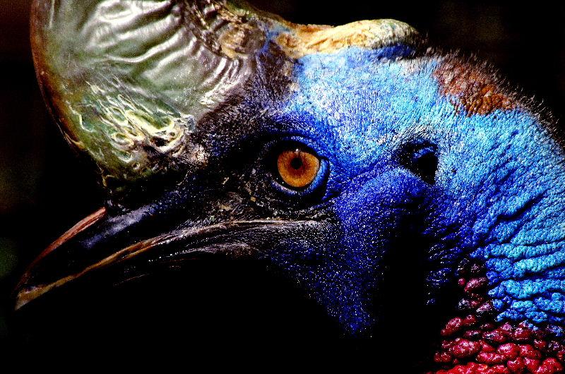 ティラノサウルスは食糧難でニワトリに進化したチキン野郎🐔 [無断転載禁止]©2ch.netYouTube動画>6本 ->画像>53枚
